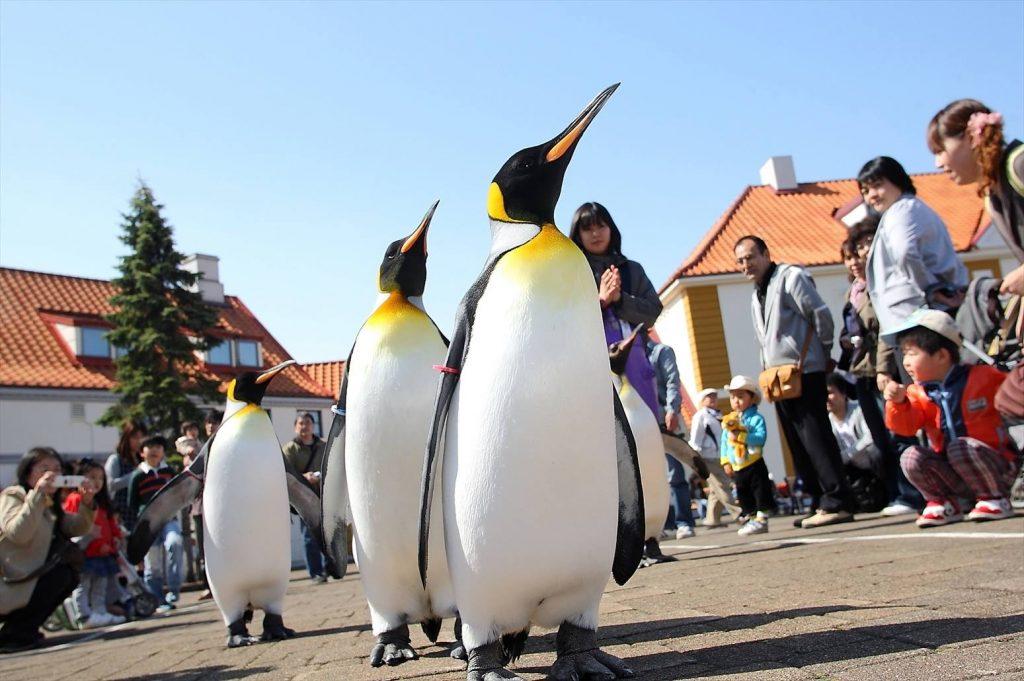 日本北海道|10大必遊景點懶人包 日本 北海道 尼克斯海洋公園 官方粉絲團照片