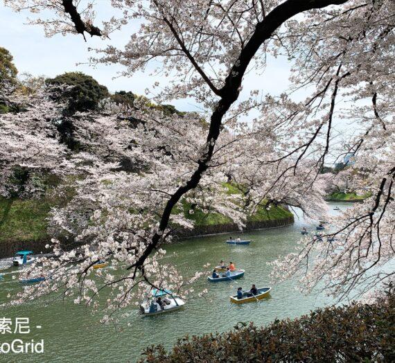 日本 東京|粉色浪漫 東京賞櫻名所 千鳥之淵、靖國神社櫻散策