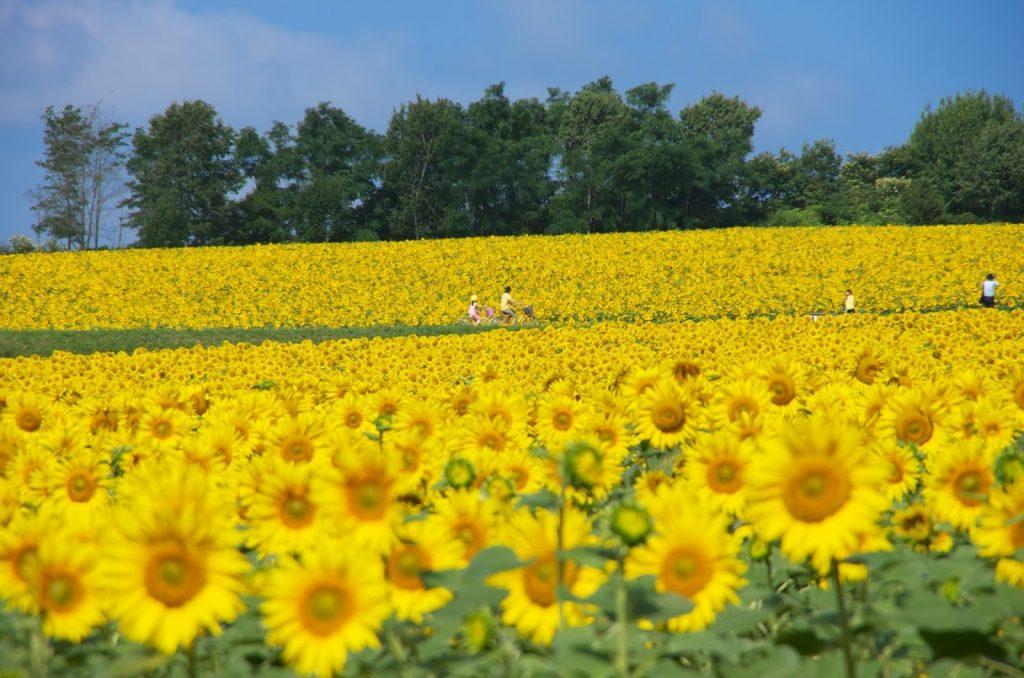 超齊全!北海道全年度祭典攻略!(春夏) K5 63202
