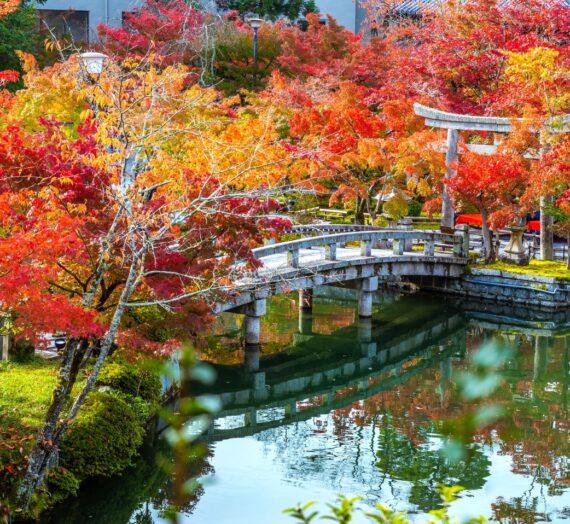 日本關西|令人驚艷的4大京都賞楓景點! 超詳細的攻略介紹!