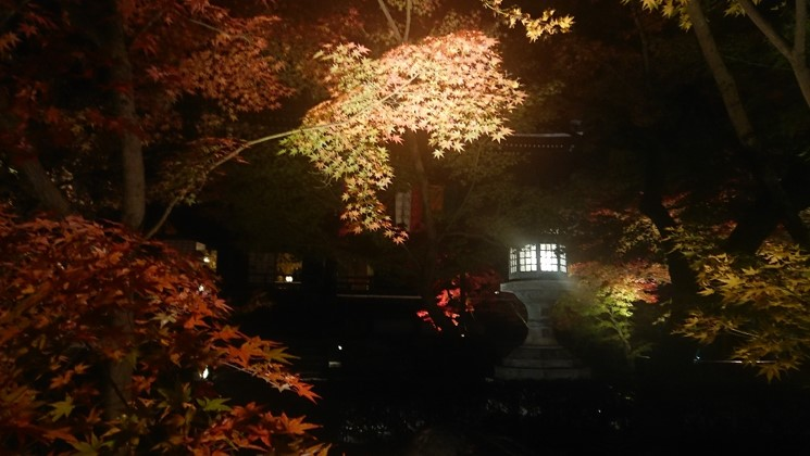 日本關西|令人驚艷的4大京都賞楓景點! 超詳細的攻略介紹! 日本關西賞楓 JAPAN Kansai Maple 永觀堂 2