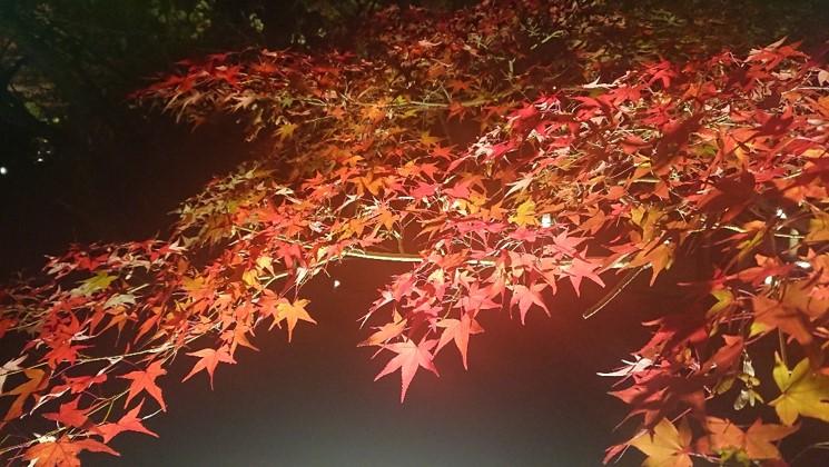 日本關西|令人驚艷的4大京都賞楓景點! 超詳細的攻略介紹! 日本關西賞楓 JAPAN Kansai Maple 永觀堂