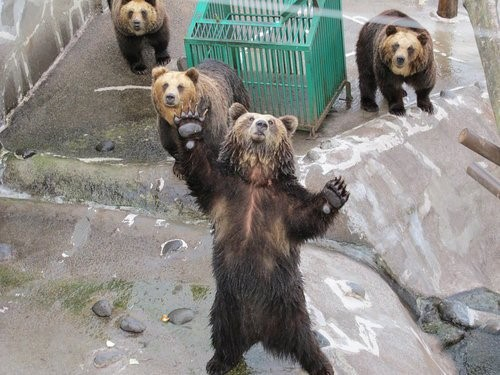 12月來去北海道!超詳細好吃、好住、好玩、好買的日本行程~可別錯過啦! 日本 北海道 japan hokkaido 昭和新山熊牧場 2