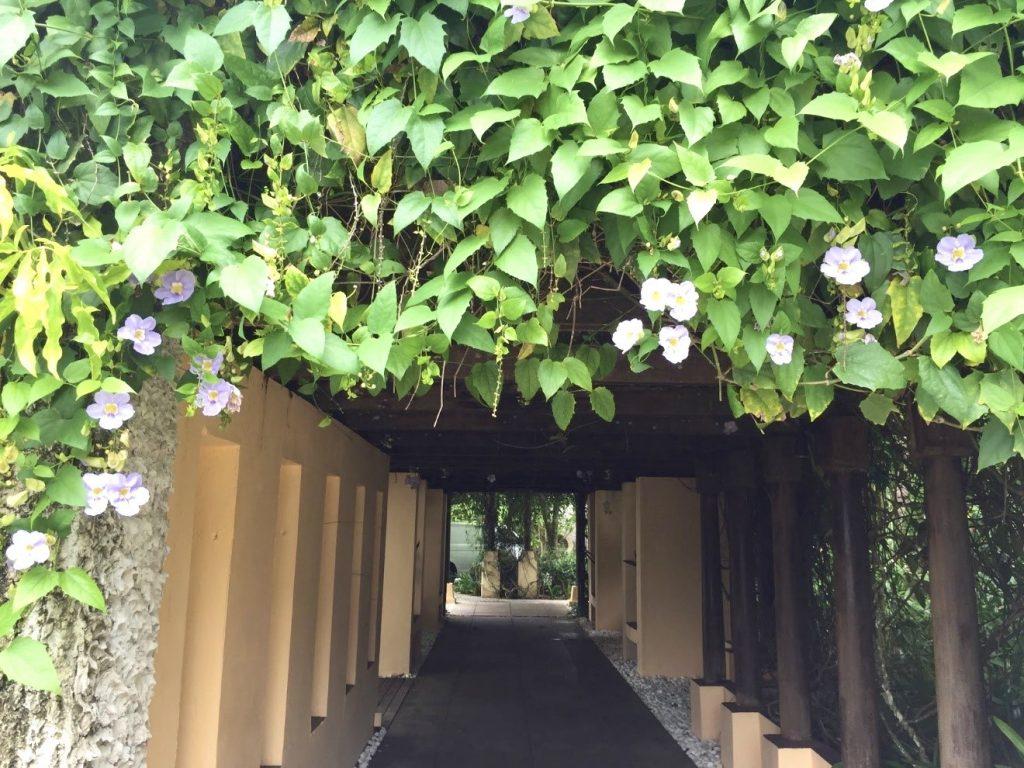 馬來西亞|沙巴綠中海Gaya Island Resort海島度假新選擇 馬來西亞 沙巴綠中海 前往餐廳的花園綠廊