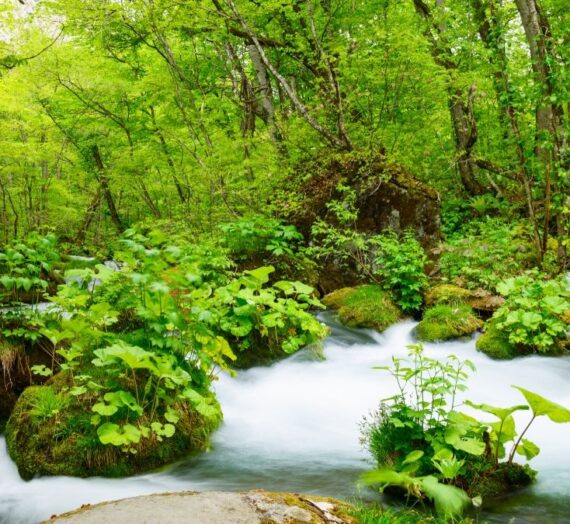 日本東北 | 一生必訪的2大溪流,愛上奧入瀨溪&猊鼻溪