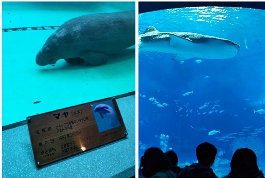 日本沖繩|自由行4天3夜行程規劃,必去景點&必吃美食全收錄! 沖繩 Okinawa 沖繩美麗海水族館 2