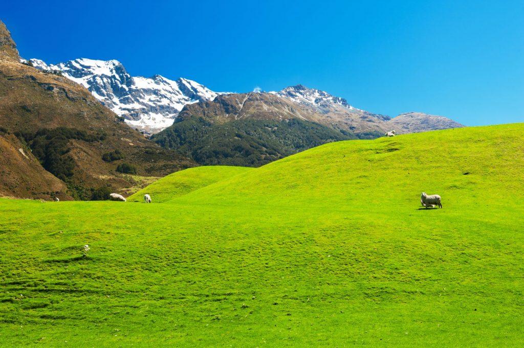 【紐西蘭南島】精選10大必玩必吃!出發但尼丁、提卡波湖、皇后鎮! 紐西蘭 New Zealand 格倫諾基Glenorchy 1