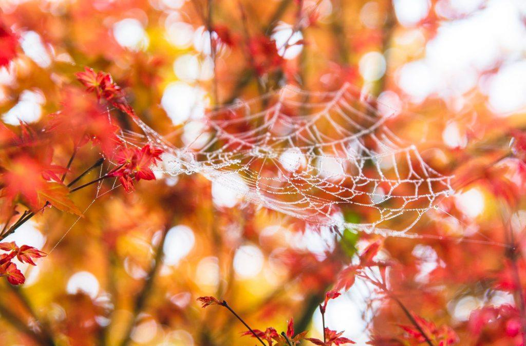 全台賞楓攻略1|北部秋季必去的楓紅景點與落羽松秘境大公開! 拉拉山 全台賞楓 2