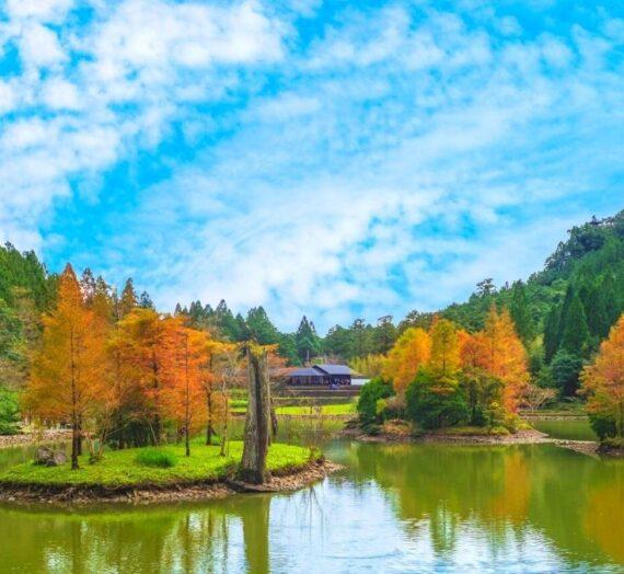 全台賞楓攻略1|北部秋季必去的楓紅景點與落羽松秘境大公開!