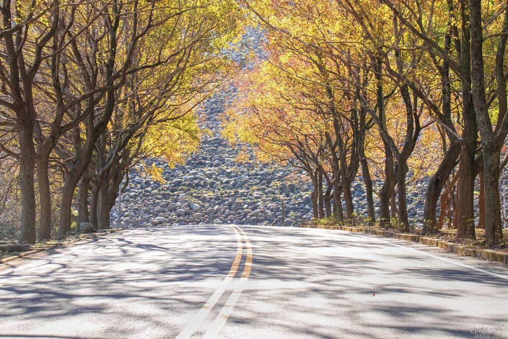 全台賞楓攻略1|北部秋季必去的楓紅景點與落羽松秘境大公開! 75538143 2543888735855734 3692502036336307004 n 1