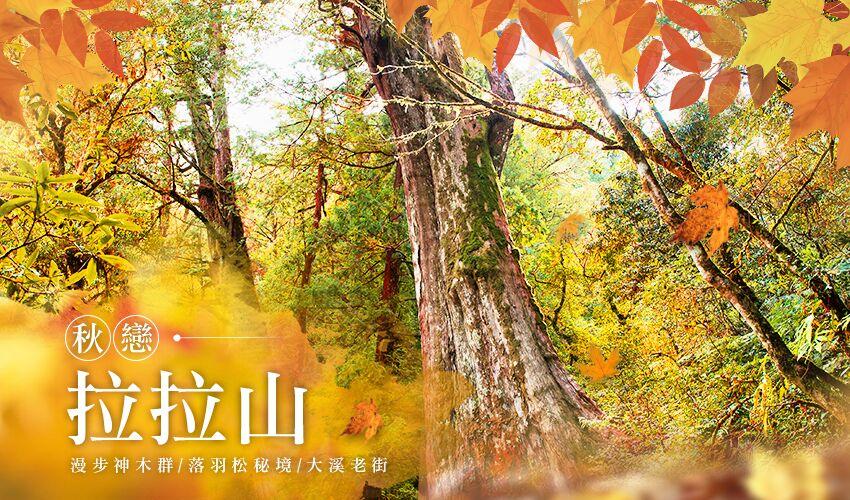 全台賞楓攻略1|北部秋季必去的楓紅景點與落羽松秘境大公開! tyu01bs34 cover