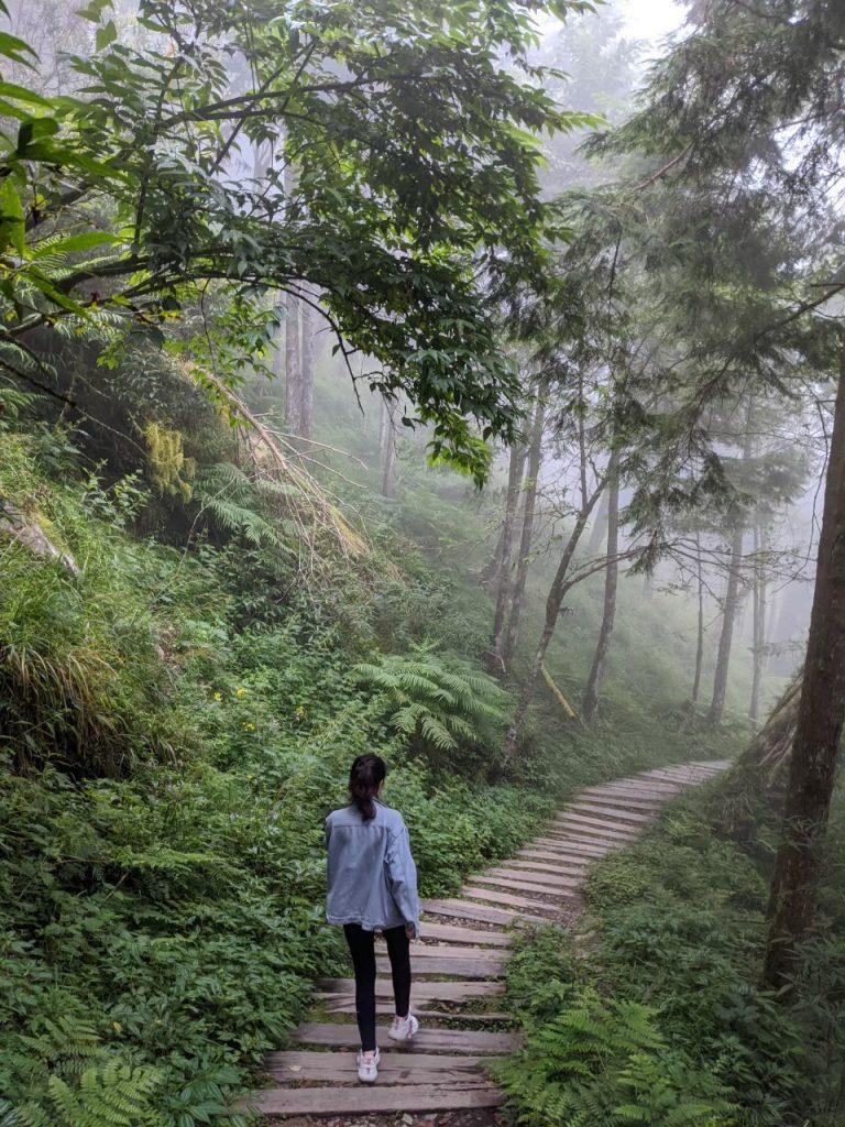 【宜蘭】棲蘭馬告神木園,前進全亞洲最大檜木園區與迷霧森林 宜蘭的力麗馬告神木園Taiwan Yilan 10