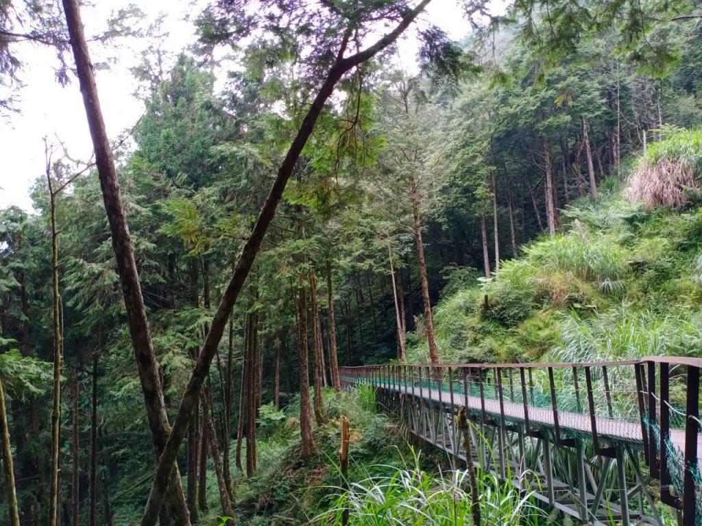 【宜蘭】棲蘭馬告神木園,前進全亞洲最大檜木園區與迷霧森林 宜蘭的力麗馬告神木園Taiwan Yilan 11