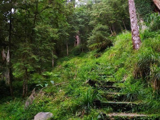 【宜蘭】棲蘭馬告神木園,前進全亞洲最大檜木園區與迷霧森林 宜蘭的力麗馬告神木園Taiwan Yilan 14