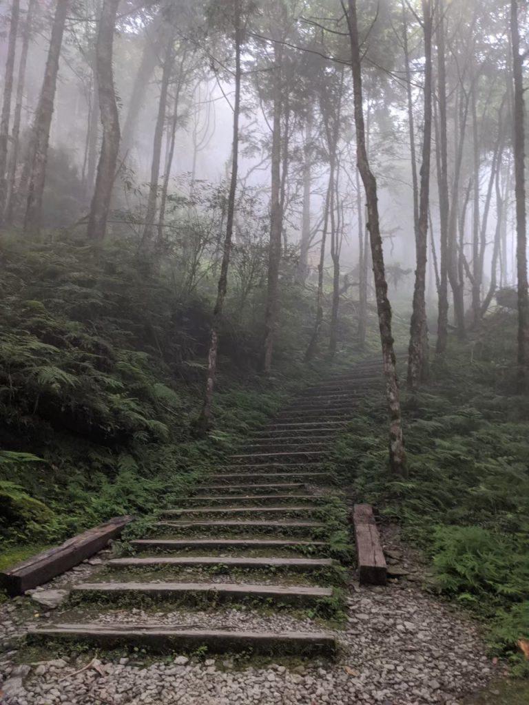 【宜蘭】棲蘭馬告神木園,前進全亞洲最大檜木園區與迷霧森林 宜蘭的力麗馬告神木園Taiwan Yilan 16