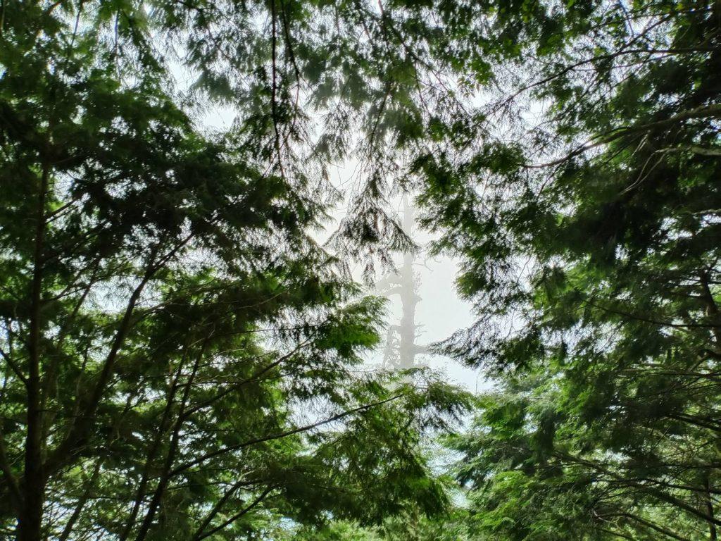 【宜蘭】棲蘭馬告神木園,前進全亞洲最大檜木園區與迷霧森林 宜蘭的力麗馬告神木園Taiwan Yilan 8