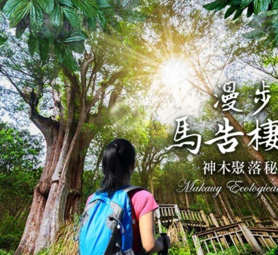 【宜蘭】棲蘭馬告神木園,前進全亞洲最大檜木園區與迷霧森林