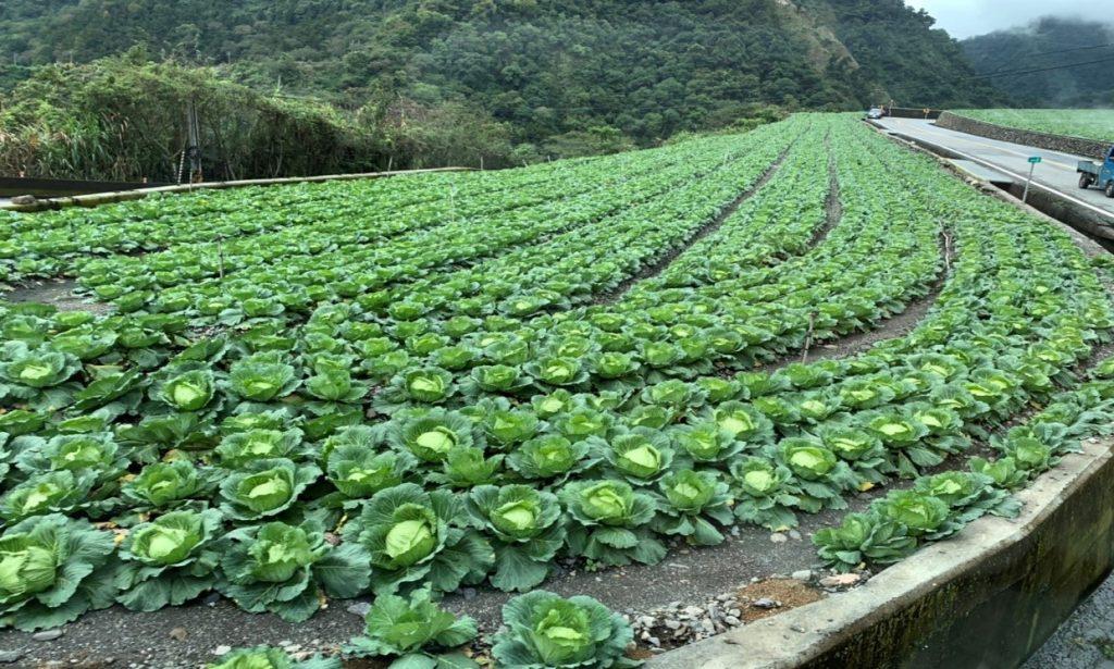 台中武陵農場攻略寶典|四季花卉、交通、自助餐、導覽解說等,看這篇就對啦! 武陵農場 Wuling Farm 3