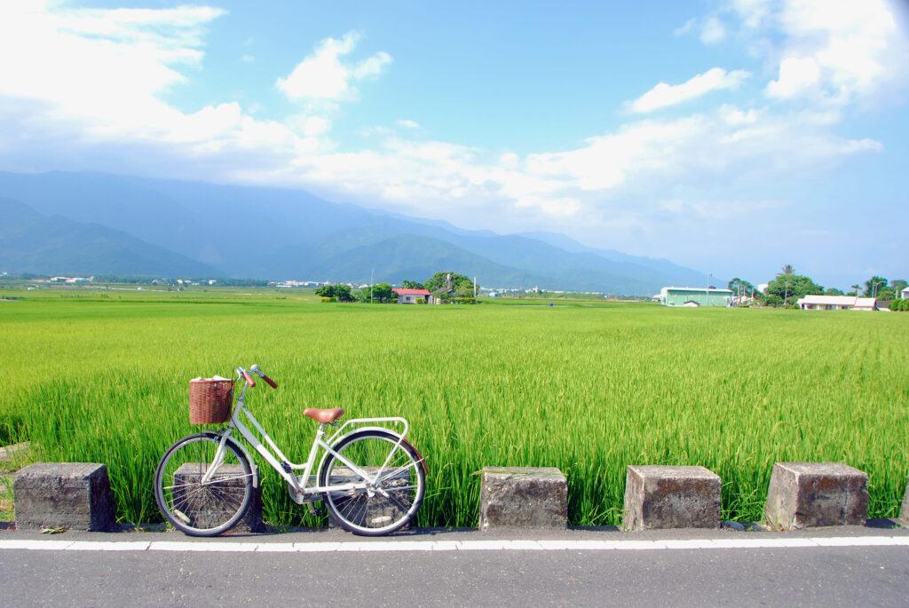 2021自行車旅遊年|盤點全台最美的5條自行車道 台灣 台東 池上 shutterstock 1726414801