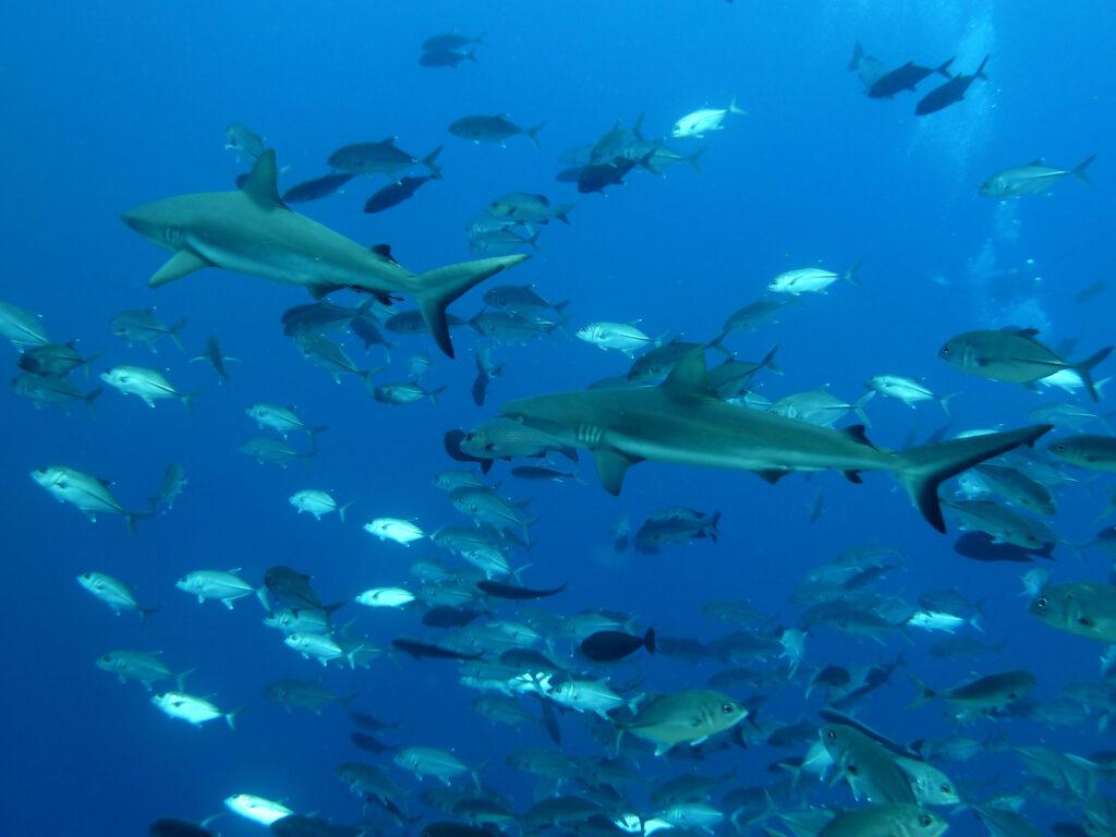 帛琉泡泡旅遊|必去5大景點 · 世界級潛點推薦 太平洋島嶼 帛琉 鯊魚城 shutterstock 388162570
