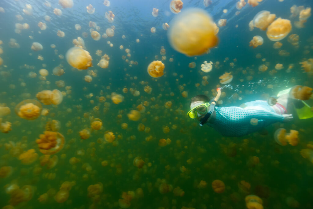 帛琉泡泡旅遊|必去5大景點 · 世界級潛點推薦 太平洋島嶼 帛琉 黃金水母湖 shutterstock 421457149