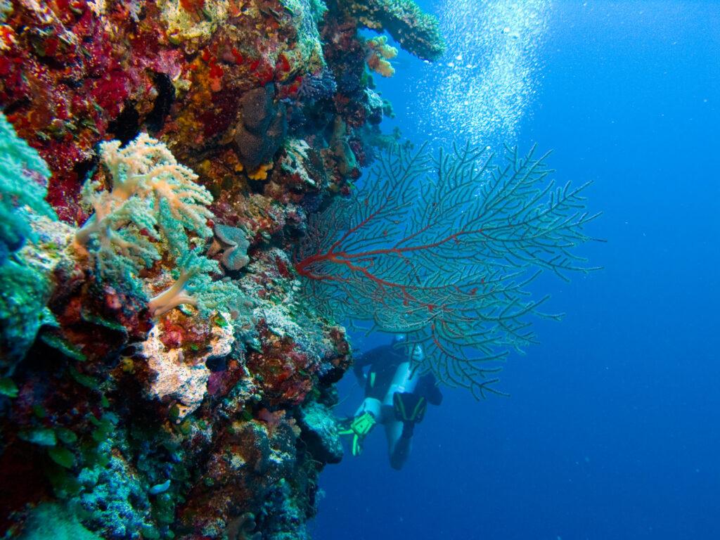 帛琉泡泡旅遊|必去5大景點 · 世界級潛點推薦 iStock 948495248
