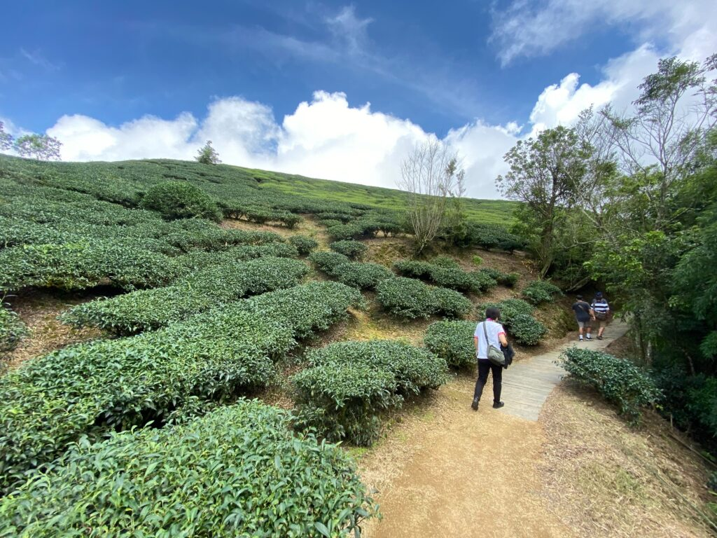 嘉義雲林一日打卡景點-走訪太平雲梯,漫步雲端的天空之旅! S 49135780