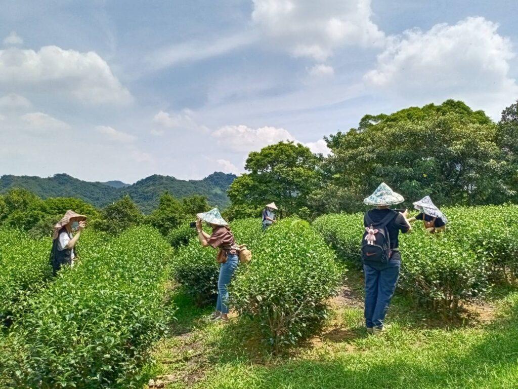 新北文山農場1日-體驗採茶、貓頭鷹筆筒DIY、練武功! 新北文山農場1日 體驗採茶 5