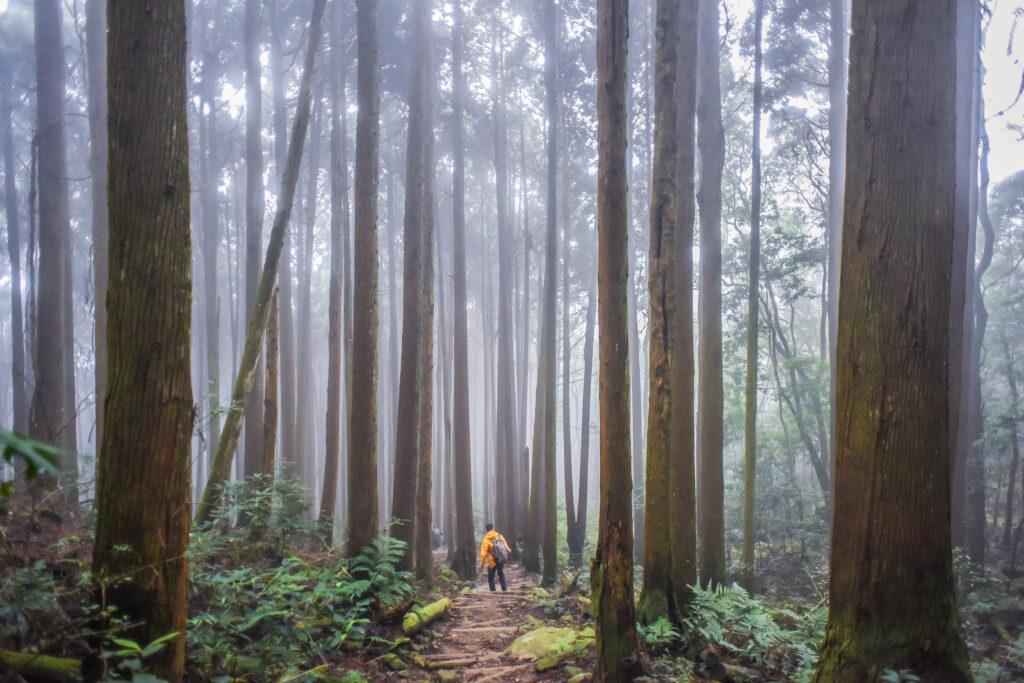 雪霸觀霧國家公園|雲的故鄉,野馬瞰山森林步道如同仙境般的世外桃源 新竹 雪霸農場 shutterstock 1352828312 1