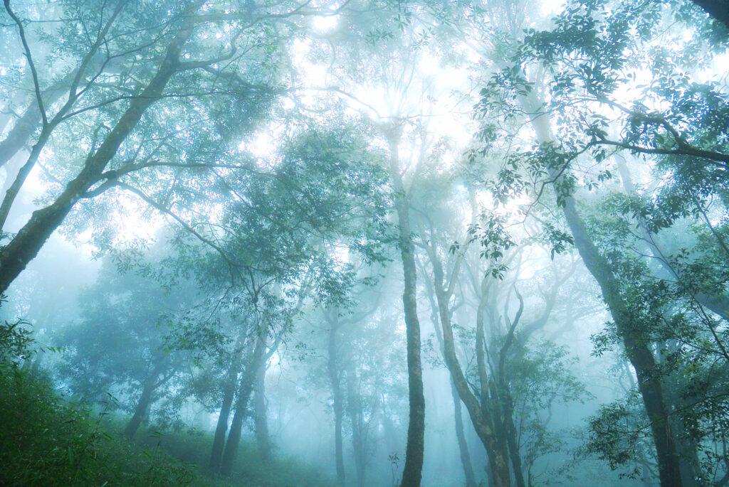 雪霸觀霧國家公園|雲的故鄉,野馬瞰山森林步道如同仙境般的世外桃源 shutterstock 1457702621